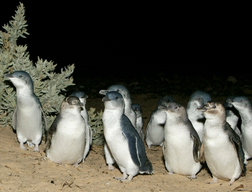 penguin group